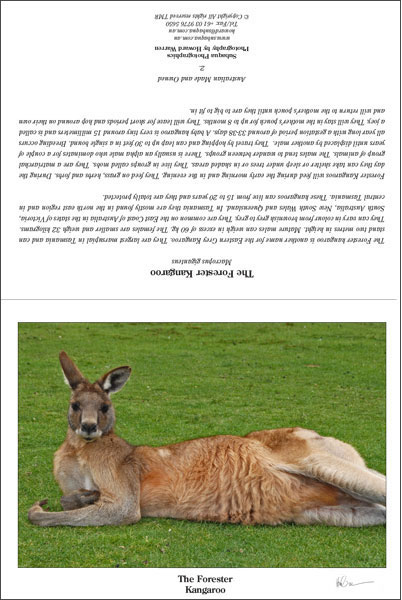The Forester Kangaroo Greeting Card