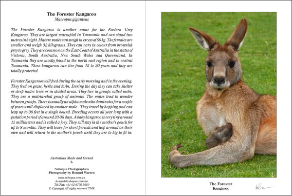 The Forester Kangaroo Portrait Greeting Card