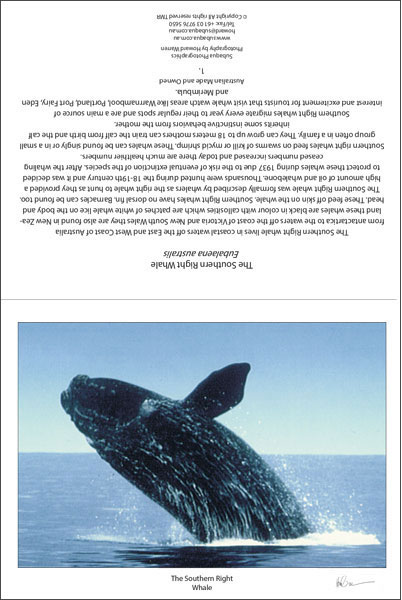 The Southern Right Whale Greeting Card