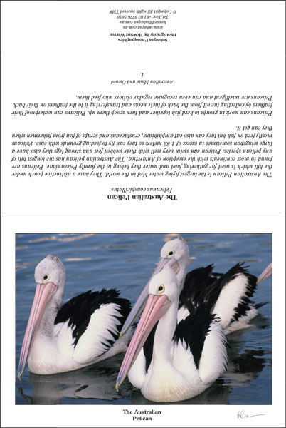 Pelican Landscape Greeting Card