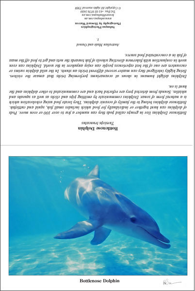 Bottlenose Dolphin 1 Greeting Card