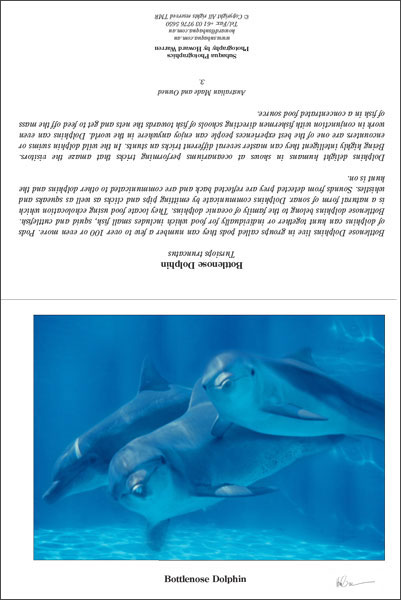 Bottlenose Dolphin 3 Greeting Card