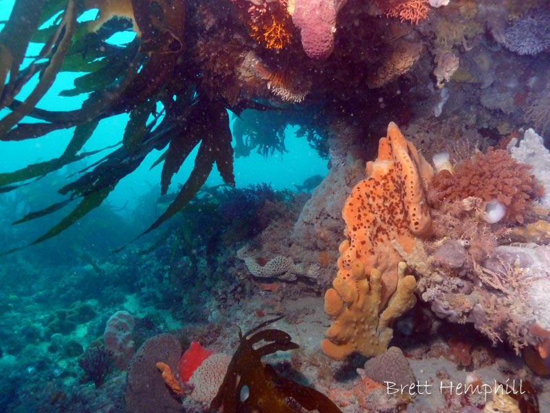 Boarfish Reef - 10M